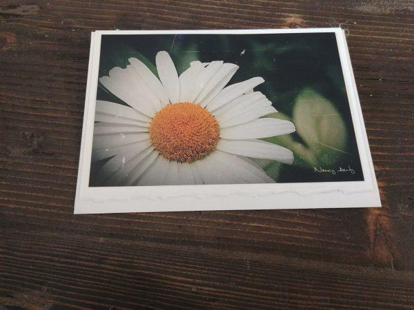 Cartes de souhaits Marguerite